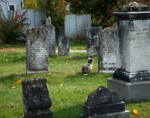 Cemetery cat 3-mod-crop